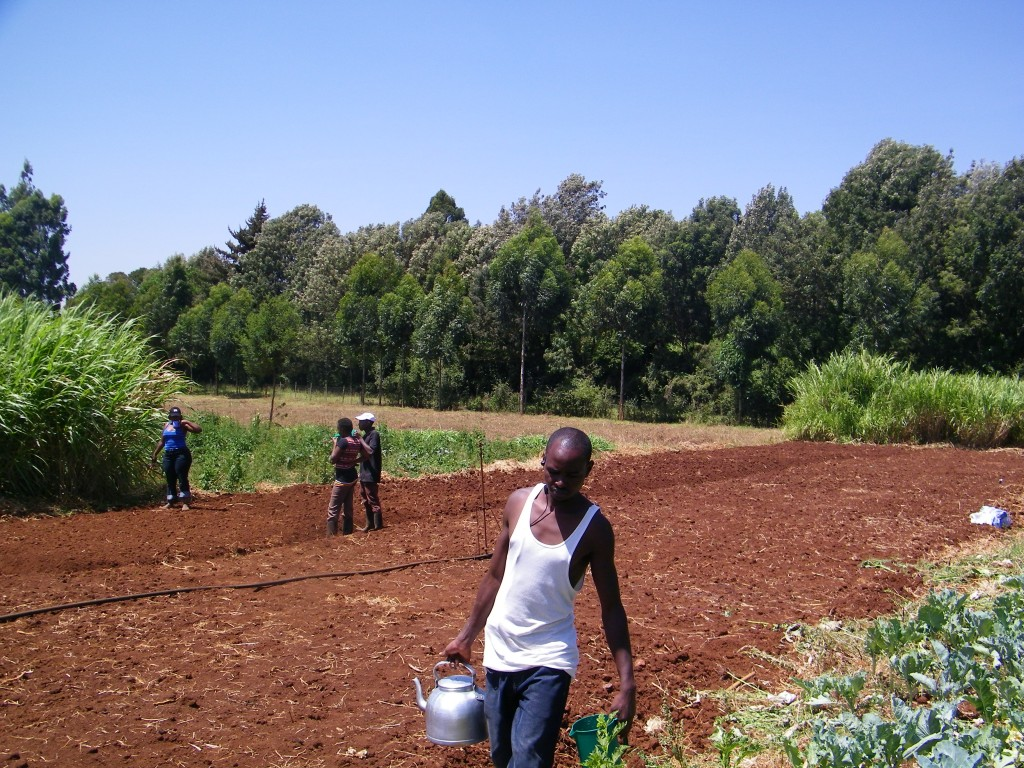 Preparing the area for planting new crops.
