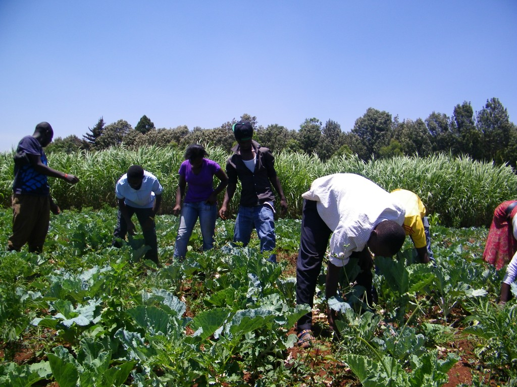 Rafiki kids working hard maintaining the crops.
