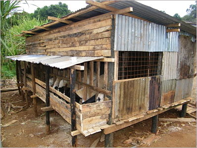 New goat shed under construction